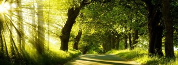 Forest in The Morning Facebook Banner
