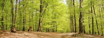Green Forest Trees Facebook Banner