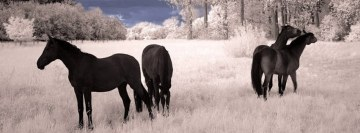 Horses in Winter Facebook Cover