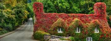 House in Wales Covered by Ivy