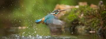 Kingfisher Flying Above River Facebook Wall Image