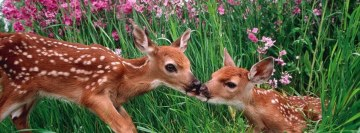 Kissing Deers