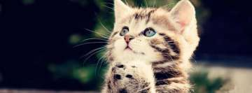 Kitten Begging Facebook Cover-ups