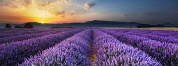Lavender Field at Sunrise Facebook Wall Image