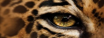 Leopard Eye Facebook Background