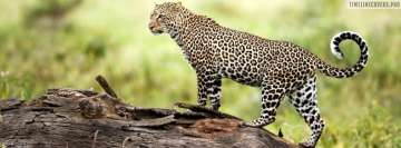 Leopard Kenya Fb Cover