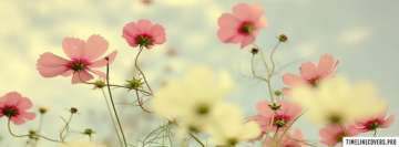 Light Pink Flowers Fb Cover