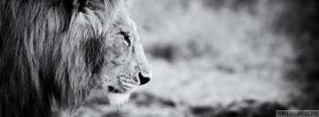 Lion Black and White Facebook Wall Image