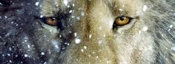Lion Close Up Facebook cover photo