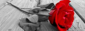 Love Rose Facebook Cover Photo