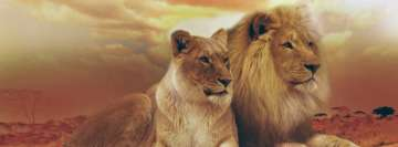 Male and Female Lion Africa Facebook Cover Photo