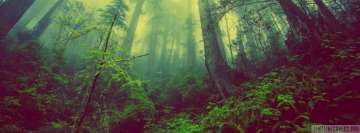 Misty Deep Forest