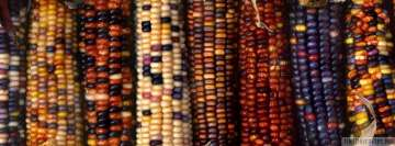 Multi Colored Ornamental Indian Corns Facebook Wall Image