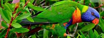 Multicolor Lorikeet Parrot Facebook cover photo