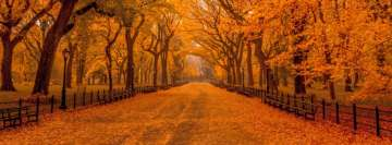 Orange Foliage Autumn in The Park Facebook Banner