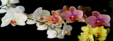 Orchids Facebook cover photo