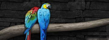 Pair of parrots fb cover Facebook Background TimeLine Cover