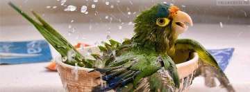 Parrot Having a Bath