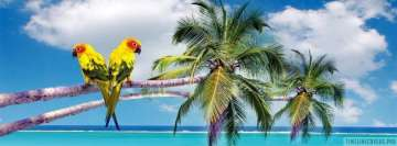 Parrots on Palm Tree at Tropical Beach Facebook Wall Image