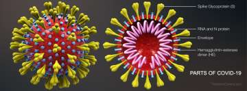 Parts of Coronavirus Covid 19 Facebook cover photo