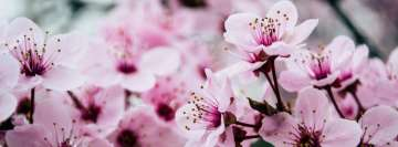 Pink Petaled Flowers Facebook cover photo