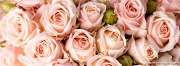 Pink Roses Close Up Facebook Cover-ups