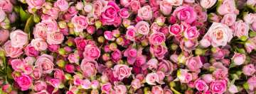 Pink Roses Girly Facebook cover photo