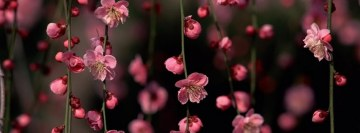 Pink Spring Flowers Facebook Cover