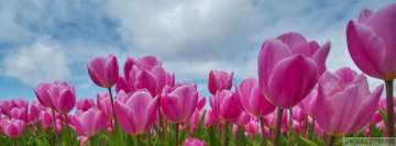 Pink Tulip Field Flowers Facebook cover photo