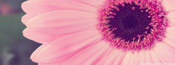 Pink Gerbera Facebook cover photo