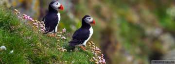 Puffin Facebook Cover-ups