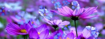 Purple and Blue Cosmos and Crocuses Flowers Painting Facebook Wall Image