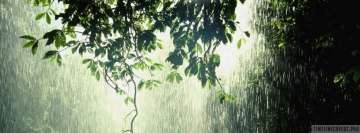 Raining in Forest Facebook Cover Photo