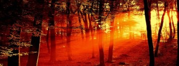 Red Forest Light Sunrise Facebook Cover