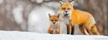 Red Fox and Her Cub in Winter Facebook Cover