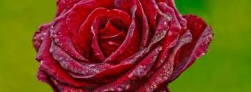 Red Rose Flower Facebook Background