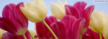 Red Yellow Flower Tulips Facebook cover photo