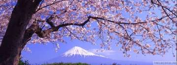 Sakura Tree Facebook cover photo