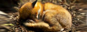 Sleeping Fox Facebook Background TimeLine Cover