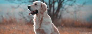 Smart Golden Retriever Facebook Banner