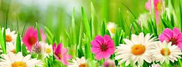 Spring Pink and White Flowers Facebook Banner