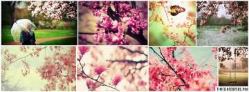 Springtime Collage Facebook cover photo