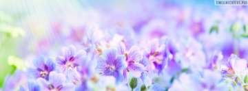 Stunning Floral Background Facebook Wall Image