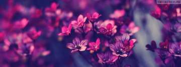 Stunning Little Flowers Facebook Cover Photo