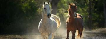 Stunning Running Horses Facebook Background