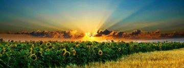 Sun Flower Field Facebook Banner