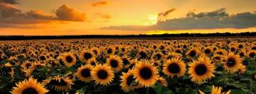Sunflower Field Facebook Wall Image