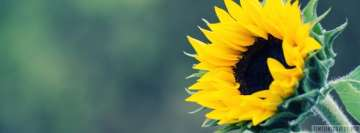 Sunflower Starts to Open Up Facebook Cover