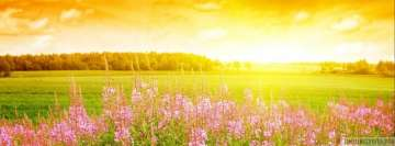 Sunny Flower Field Facebook Wall Image