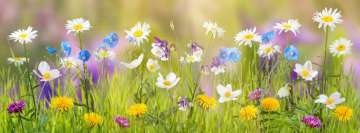 Sunny Spring Flowers Facebook Background TimeLine Cover
